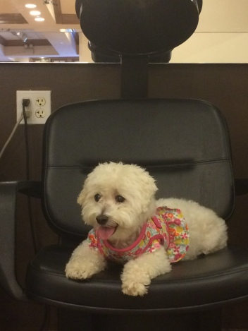 My baby, Lucy, goes to the human hair salon. She's high maintenance too.