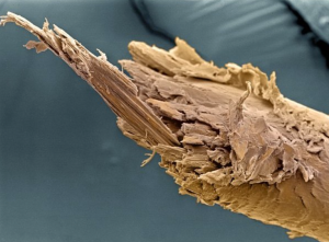 In high school, I always found split ends under a microscope fascinating and creepy crawly at the same time.